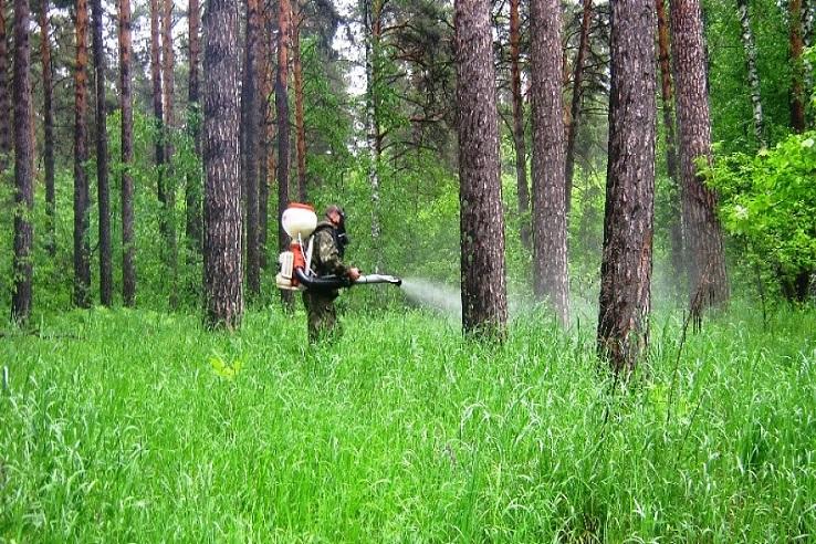 Обработка от клещей лесных массивов в Балашове